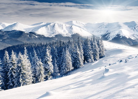 Beautiful winter landscape with snow covered trees Stock fotó