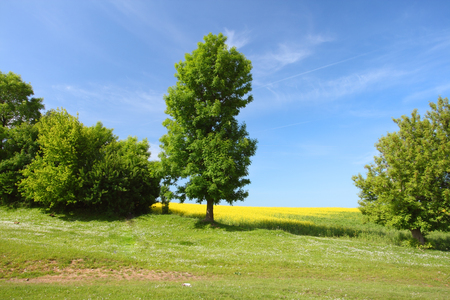 Tree on green meadow and the blue sky Stock Photo - 85416321