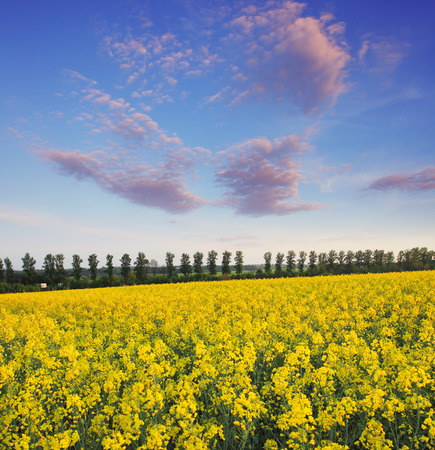 spring field and the beautiful blue sky Stock Photo - 85416262