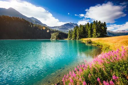 Excellente vue sur l'étang azur Champfer en vallée alpine. Emplacement Alpes suisses, village de Silvaplana, quartier de Maloja, en Europe. Banque d'images
