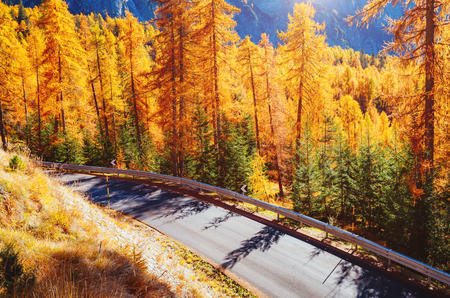 Magical yellow larches glowing in the sunshine. Unusual and gorgeous scene. Tourist attraction. Location place Dolomiti Alps, Cortina d'Ampezzo, Veneto, province Belluno, Italy, Europe. Beauty world. Stok Fotoğraf - 86727280