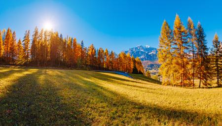 Magical yellow larches glowing in the sunshine. Unusual and gorgeous scene. Tourist attraction. Location place Dolomiti Alps, Cortina d'Ampezzo, Veneto, province Belluno, Italy, Europe. Beauty world. Stock Photo - 86727333