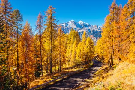 Magical yellow larches glowing in the sunshine. Unusual and gorgeous scene. Tourist attraction. Location place Dolomiti Alps, Cortina dAmpezzo, Veneto, province Belluno, Italy, Europe. Beauty world.