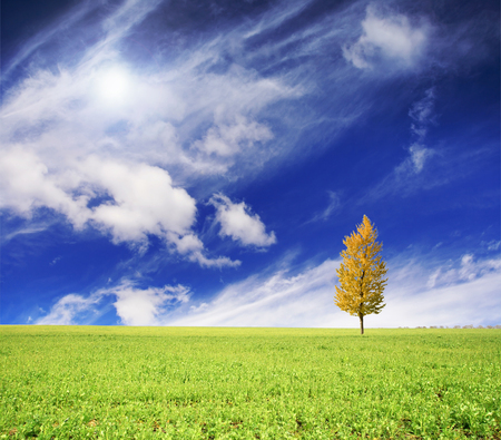 Tree on green meadow and the blue sky Stock Photo - 87662928