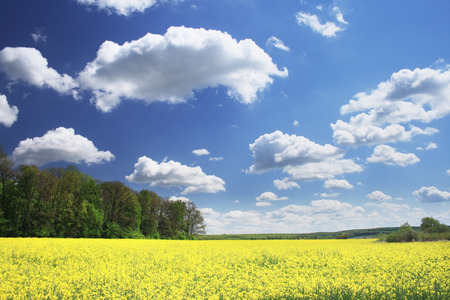 spring field and the beautiful blue sky Stock Photo - 87662843