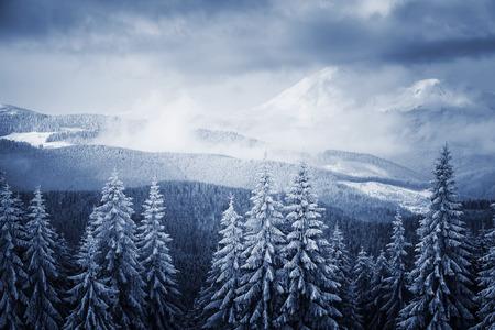 劇的な冬景色。絵と豪華なシーン。場所は、カルパチア国立公園、ウクライナ、ヨーロッパを配置します。アルプスのスキー リゾート。美の世界。