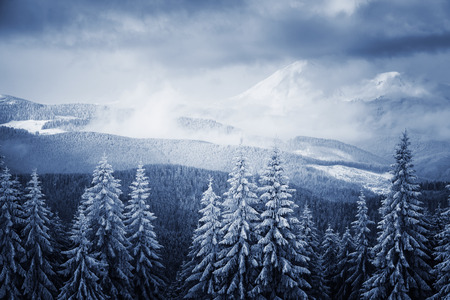 Dramatic wintry landscape. Picturesque and gorgeous scene. Location place Carpathian national park, Ukraine, Europe. Alps ski resort. Beauty world. Blue toning effect. Happy New Year! Zdjęcie Seryjne
