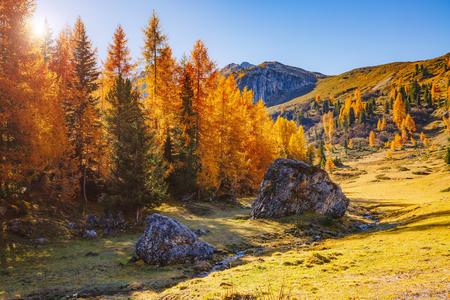 Magical yellow larches glowing in the sunshine. Unusual and gorgeous scene. Tourist attraction. Location place Dolomiti Alps, Cortina dAmpezzo, Passo di Giau, Veneto, Italy