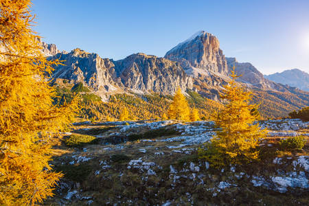 Bright yellow larches glowing in the sunlight. Picturesque and gorgeous scene. Popular tourist attraction. Location place Dolomiti Alps, Cortina dAmpezzo, Falzarego pass, Italy Stock Photo