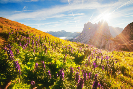 Calm view of the alpine hill in sunlight. Great and gorgeous morning scene. Location place Puez-Odle National Park, Gardena, Seceda peak, Geisler Dolomiti group. Tyrol, Italy