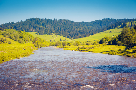 Vivid green hills and rapid river in sunny day. Location place Carpathian, Ukraine, Europe. Stock Photo