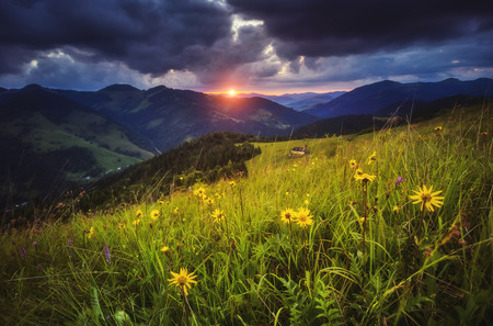 Morning view of the blooming field in the sunlight. Dramatic scene and picturesque picture. Location place Carpathian, Ukraine, Europe. Stock Photo