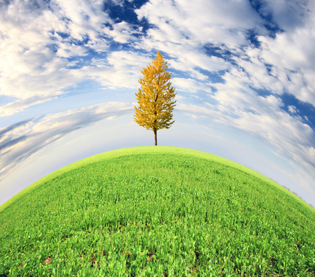 Tree on green meadow and the blue sky Stock Photo - 95596161