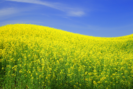 spring field and the beautiful blue sky Stock Photo - 95596163