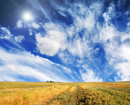 summer meadow and the beautiful blue sky Stock Photo - 95596242