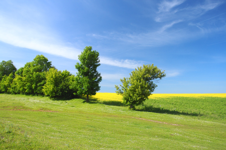 Tree on green meadow and the blue sky Stock Photo - 95596457