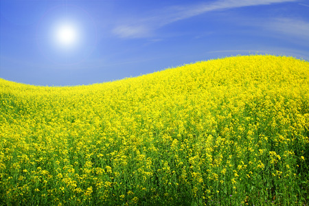 spring field and the beautiful blue sky Stock Photo - 95596462