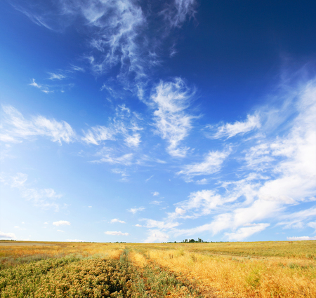 summer meadow and the beautiful blue sky