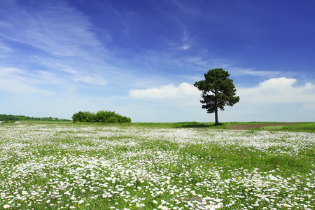 Tree on green meadow and the blue sky Stock Photo - 95596560