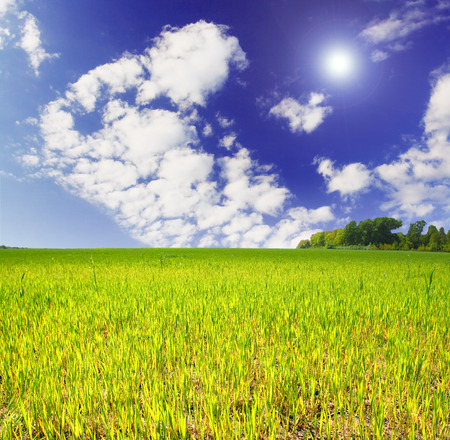 spring field and the beautiful blue sky Stock Photo - 95598376