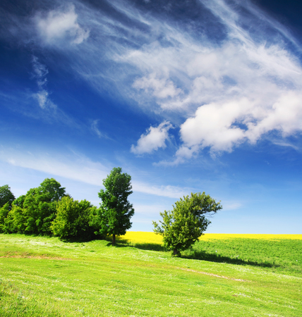 Trees on green meadow and the blue sky Stock Photo - 95598405