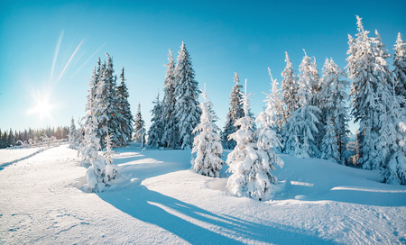 Majestic winter trees glowing by sunlight. Picturesque and gorgeous wintry scene. Location place Carpathian national park, Ukraine, Europe. Alps ski resort. Beauty world. Blue toning. Happy New Year! Stockfoto