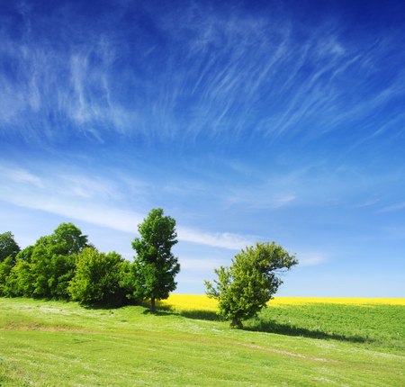 Trees on green meadow and the blue sky