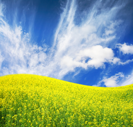 spring field and the beautiful blue sky Stock Photo - 95599055