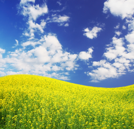 spring field and the beautiful blue sky Stock Photo - 95599061