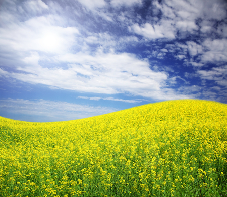 spring field and the beautiful blue sky Stock Photo - 95599111