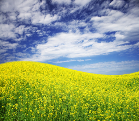 spring field and the beautiful blue sky Stock Photo - 95599382