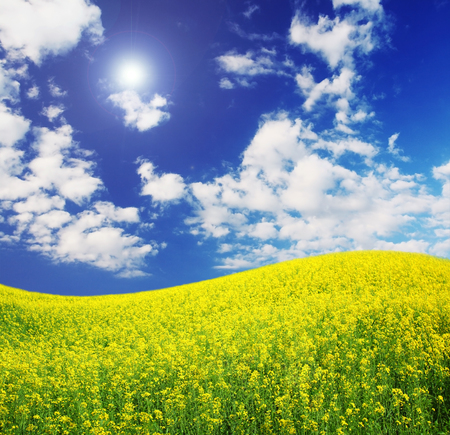 spring field and the beautiful blue sky