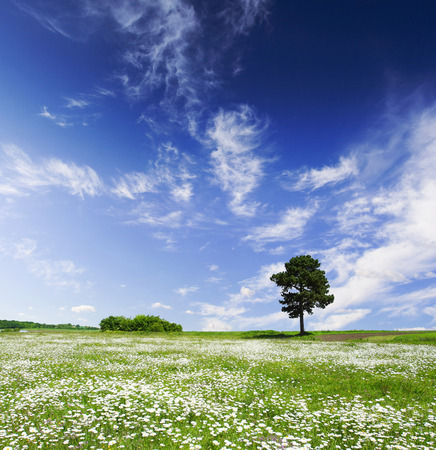 Tree on green meadow and the blue sky