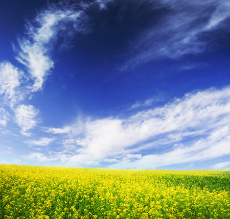 spring field and the beautiful blue sky Stock Photo - 95710039