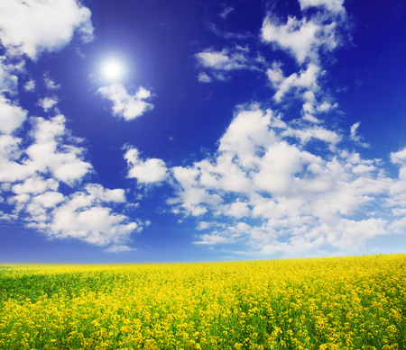 spring field and the beautiful blue sky Stock Photo - 95710117