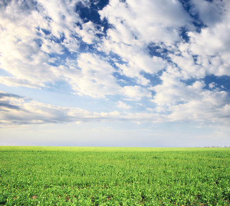 spring field and the beautiful blue sky Stock Photo - 95710211
