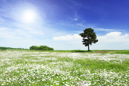 Tree on green meadow and the blue sky Stock Photo - 95710254