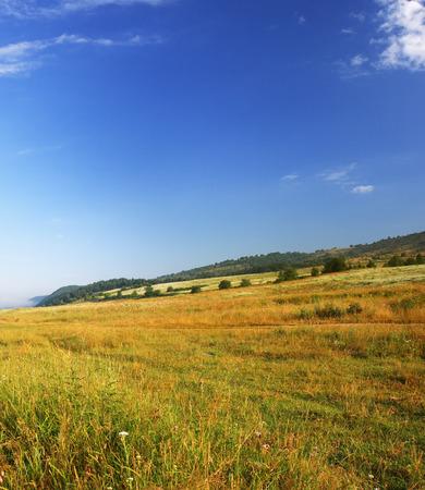 field of grass and perfect blue sky Banco de Imagens