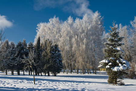 A frosty and sun day is in park