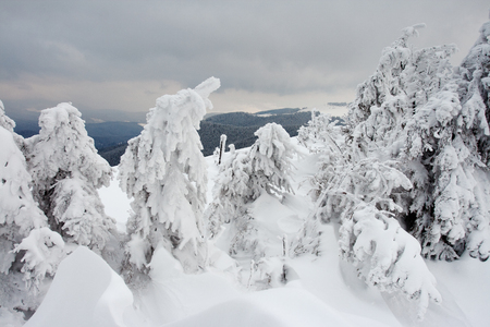 Winter trees in mountains covered with fresh snow