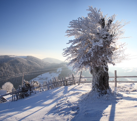 Winter tree in mountains covered with fresh snow