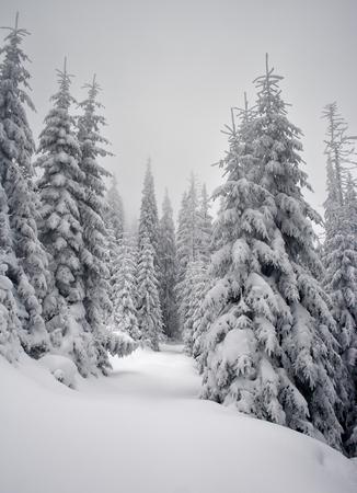 新雪に覆われた山の冬の木