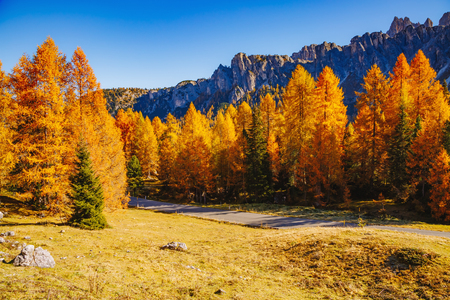 Magical yellow larches glowing in the sunshine. Unusual and gorgeous scene. Tourist attraction. Location place Dolomiti Alps, Cortina dAmpezzo, Passo di Giau, Veneto, Italy, Europe. Beauty world.