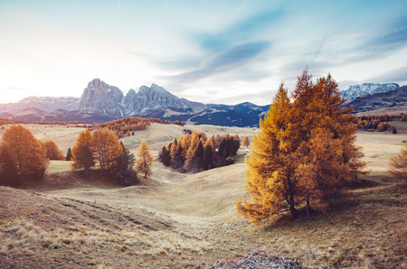 Lovely yellow larches in sunlight. Unique and gorgeous scene. Location place Dolomiti, Compaccio village, Seiser Alm or Alpe di Siusi, Province of Bolzano - South Tyrol, Italy, Europe. Beauty world.