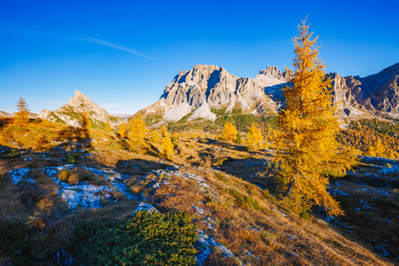 Bright yellow larches glowing in the sunlight. Picturesque and gorgeous scene. Popular tourist attraction. Location place Dolomiti Alps, Cortina dAmpezzo, Falzarego pass, Italy, Europe. Beauty world.