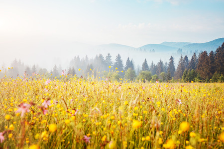 Blooming grazing land in the morning light. Wonderful day and gorgeous scene. Location place Carpathian, Ukraine, Europe. Perfect vacation outdoors. Climate change. Explore the worlds beauty.