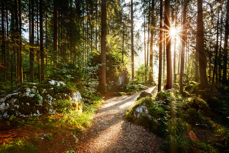 Magical scenic and pathway through woods in the morning sun. Dramatic scene and picturesque picture. Wonderful natural background. Location place Germany Alps, Europe. Explore the world's beauty.
