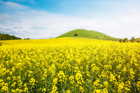 Captivating views of canola field in sunlight. Picturesque day and gorgeous scene. Location rural place of Ukraine, Europe. Wonderful image of wallpaper. Concept ecology. Explore the worlds beauty. 스톡 콘텐츠