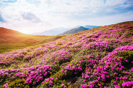 Gorgeous scene of the alpine valley in sunlight. Picturesque day. Location place Carpathian Ukraine, Europe. Wonderful image of wallpaper. Excellent outdoor vacation. Explore the world's beauty. Фото со стока - 101340897