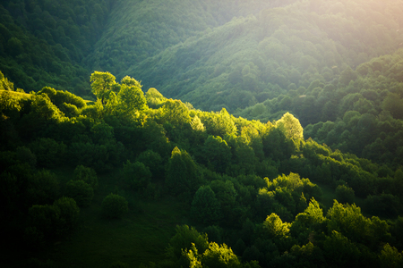 Magical woods in the morning sun. Fairy forest in springtime. Picturesque day and gorgeous scene. Location place Carpathian, Ukraine, Europe. Wonderful image of wallpaper. Explore the worlds beauty.